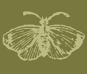 butterfly_300