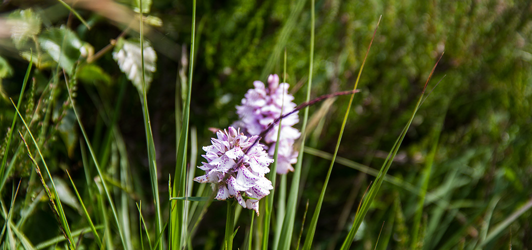 edinbane-croft-self-catering-cottages-orchids