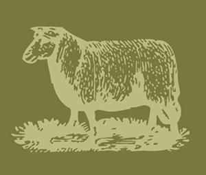sheep_300